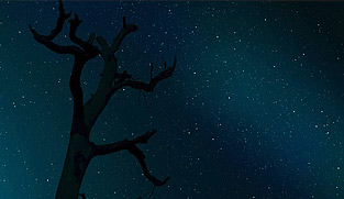 Звуки ночи | звездное небо
